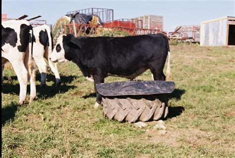 Mineral Feeders For Cattle cattle mineral feeders