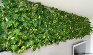 pflanzen dekoration decoration with money plants trendyoutlook