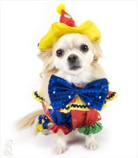 clown costume for dogs 1000 images about clown on clown costumes clowns and the clown