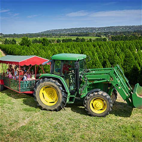 ideas about perth christmas tree farm easy diy