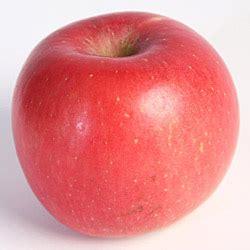j k agri vegetables seeds a z of fruit veg agribusiness pakistan