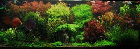 Award Winning Aquascapes Aquarium Dekoration Pflanzen