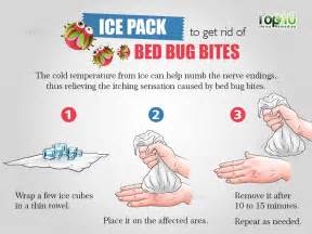 How To Treat Bed Bug Bites Bed Bugs Bites Treatment On Skin Clipartsgram Com