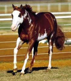 unique horse colors the horse forum