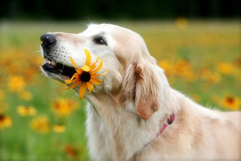 is there a dog caring for your older dog australian dog lover