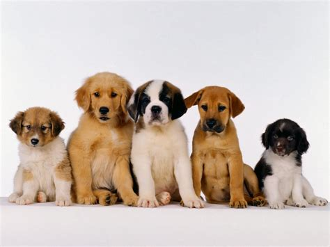 puppies and friends puppy friends wallpaper for your computer desktop