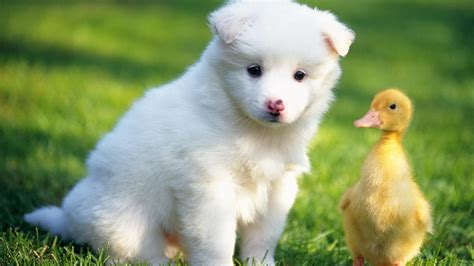 wallpaper of cute animals baby animal wallpaper hd images one hd wallpaper