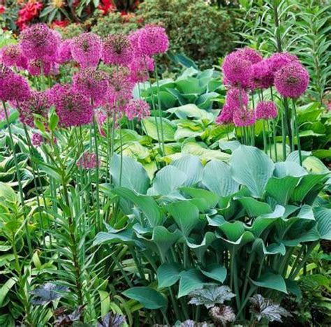 flowers to go 1000 images about perennial garden on