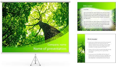 layout powerpoint belli les arbres forestiers nature vert bois soleil milieux