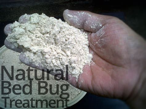 best bed bug treatment 17 best ideas about bed bugs treatment on pinterest bed bug remedies treatment for