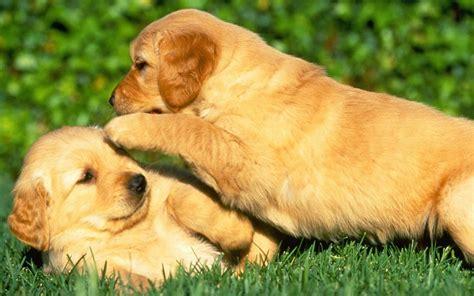 photos of puppies puppy power puppies wallpaper 15897198 fanpop