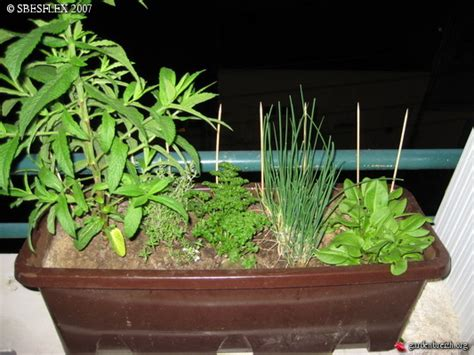 Plantation Herbes Aromatiques Jardiniere by Jardiniere Plante Aromatique