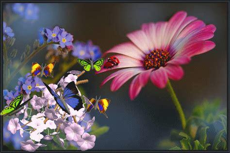 imagenes mariposas en movimiento imagenes de rosas y mariposas con glitter imagui