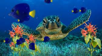 Download Now Coral Reef Aquarium Animated Wallpaper