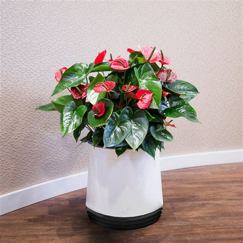 Air Planter by Airy Air Purifying Planter The Green