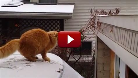 fail lol blog laugh out loud funny pictures and videos fail cat driverlayer search engine