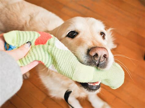 what are dogs made out of how to make a for your out of socks 10 steps