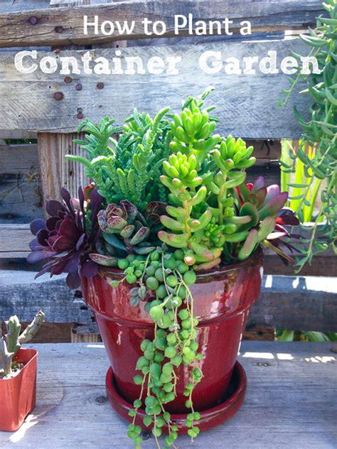 plant  container garden  enhance  yard