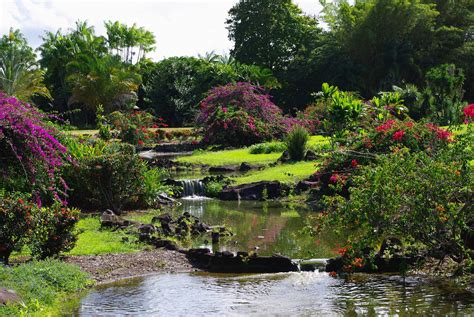 Hilo Botanical Garden Gardens In Hawaii