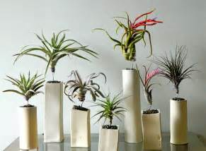 Design For Indoor Flowering Plants Ideas Air Plants Archives A Colorado Courtshipa Colorado Courtship