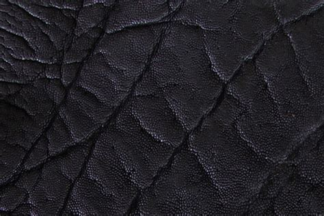 Buy Sofa Online Elephant Leather Roje Exotic Leather
