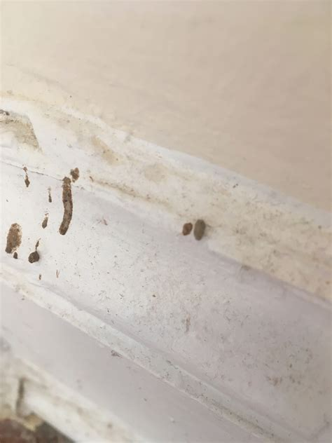 bed bugs in walls id droppings and marks on wall a not bed bug related