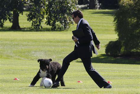 bo the white house dog happy birthday bo obama family dog turns 7 msnbc