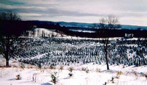 christmas tree farm sussex wantage news tree farm celebrates 50 years