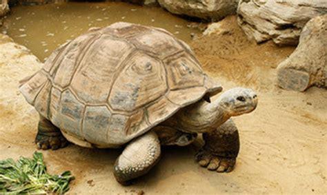 imagenes de xeso animal 161 los vertebrados m 225 s longevos del mundo