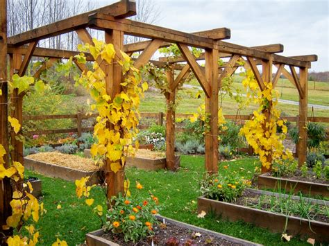 wooden grape vine trellis my journey