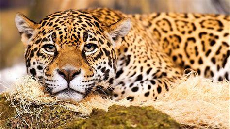 imagenes de animales y plantas de la selva los animales m 225 s peligrosos de la selva