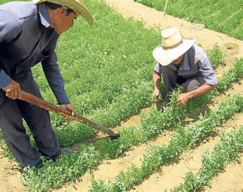 Calendã Agricultores Tingambato Agricultura