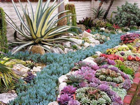 Plantas Para Mucho Sol #5: Plantas-suculentas.jpg