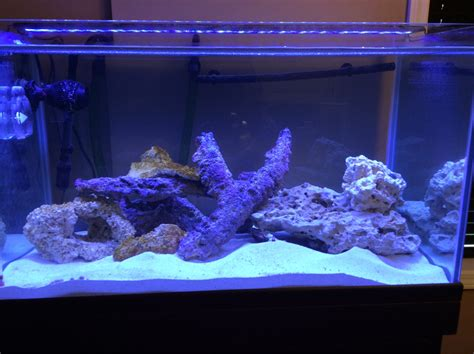 tips  tricks  creating amazing aquascapes page