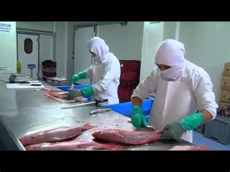 escuela de pescado 8415785712 convirtiendo el pescado en productos innovadores escuela de co youtube