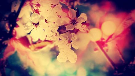 wallpaper for pc of flowers vintage flowers wallpapers wallpaper cave