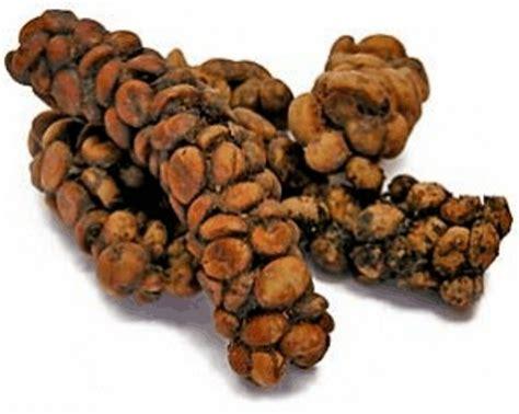 Coffe Kopi Kesehatan Sejuta Manfaat khasiat kopi luwak untuk kesehatan graylinewest