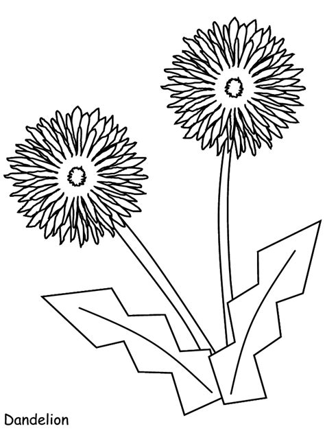 printable dandelion flowers coloring pages