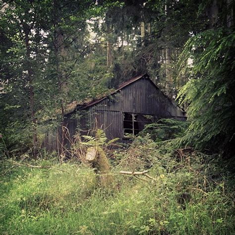 the cabin in the woods cabin shed shack forest woods