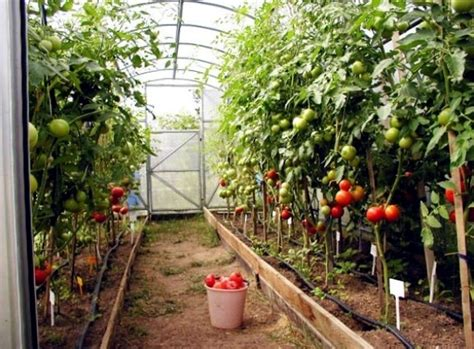 Accumulation Greenhouse ? Advice for home gardeners to