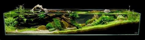 aquarium design for guppies see more in the all things aquaria board https www