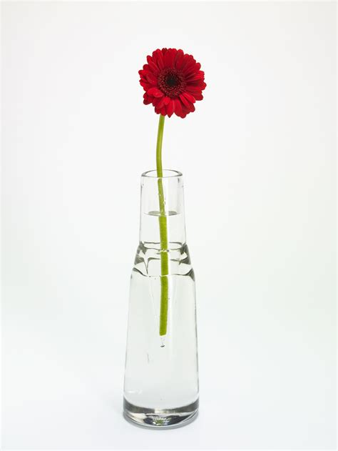 Flower Vases by Pictures Of Flowers In A Vase Beautiful Flowers
