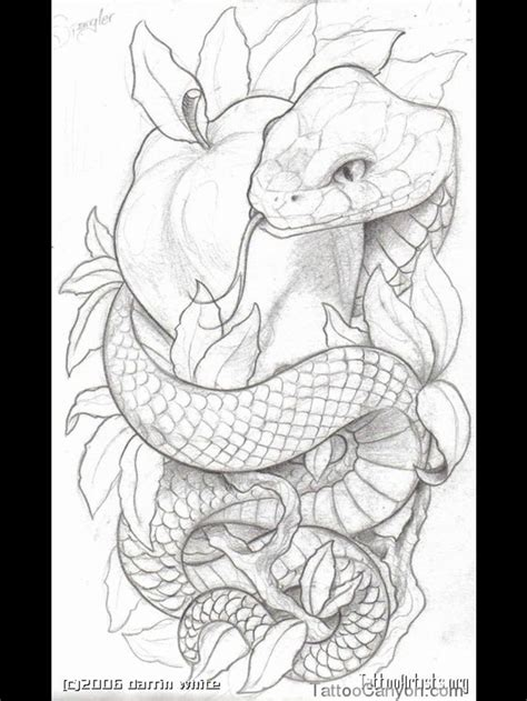 snake and apple tattoo designs 48 best snake sketches images on design