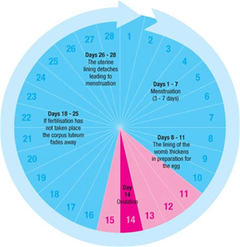 Menstrual Cycle And Ovulation Calendar Ovulation Symptoms Signs Of Ovulation