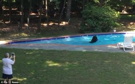 300lb black goes for a dip in new jersey family s