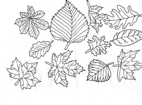green leaf coloring pages free coloring pages of leaf
