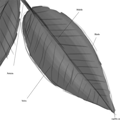 how to a how to draw a leaf in 4 steps with photoshop