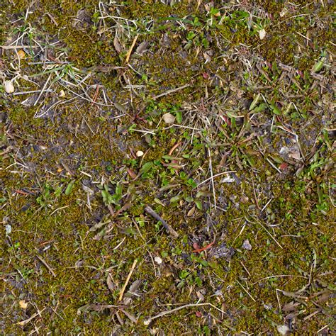 forest floor 1 texture free textures for 3d