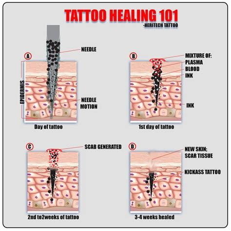 tattoo aftercare drinking alcohol best 25 tattoo aftercare ideas on pinterest aftercare