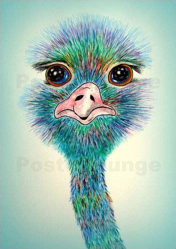 Kaos Print Burung Colibri 252 best voegel images on